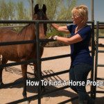 How To Buy and Sell Horse Real Estate in Tucson Arizona